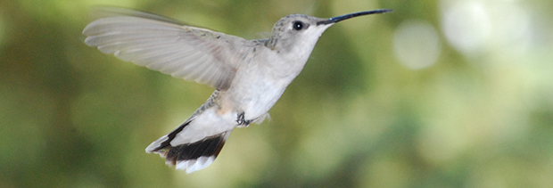 Google's New Hummingbird Algorithm & Keyword Locking