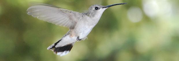 Google's New Hummingbird Algorithm & Keyword Locking